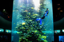 Dive Deep with Qingdao's Underwater World