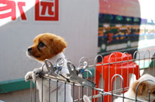Four Footed Friends: Where to Buy Pets in Shenzhen