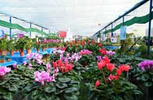 Freshen up Your Home: Flower and Plant Markets in Chengdu