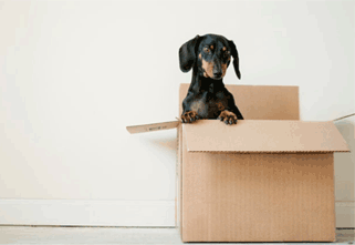 5 Tips for a Stress-Free Moving Day in China