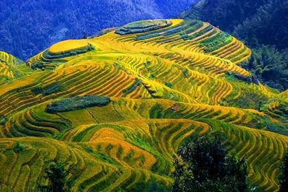 Dragon Back Terraced Fields