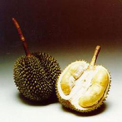 Durian 榴莲
