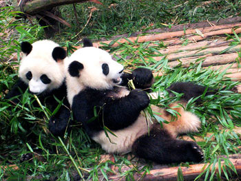 Good, Wholesome Fun: Family Friendly Activities in Chengdu