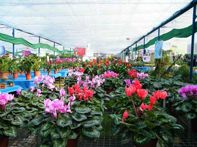 Freshen up Your Home Flower and Plant Markets in Chengdu